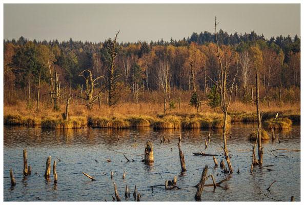 Uferlandschaft Schwenninger Moos 1590