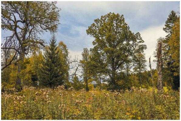 Landschaft im Irndorfer Hardt 8551