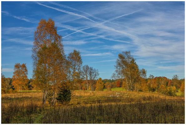 Landschaft im NSG Irndorfer Hardt 1332