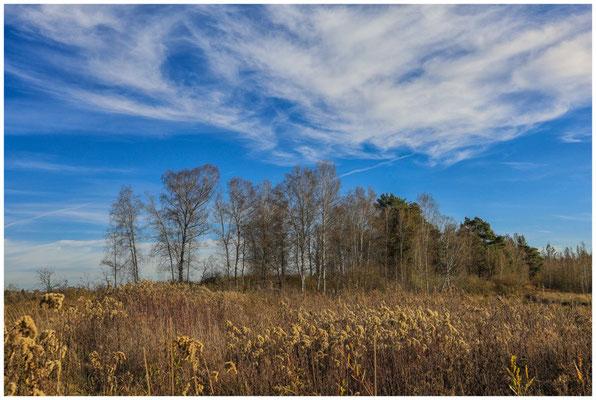 Landschaft im Pfrunger-Burgweiler Ried 4989