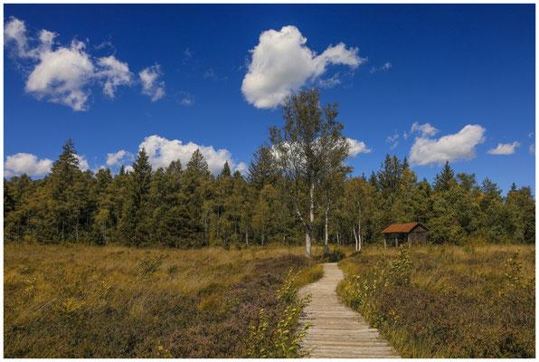 Bohlenweg im Wurzacher Ried mit Torfhütte 3814