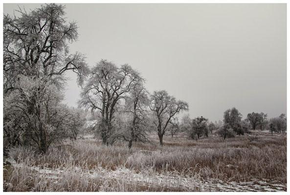 Winterlandschaft mit altem Bauernhaus bei Stockach 2511
