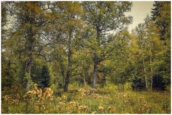 Landschaft im Irndorfer Hardt 8547