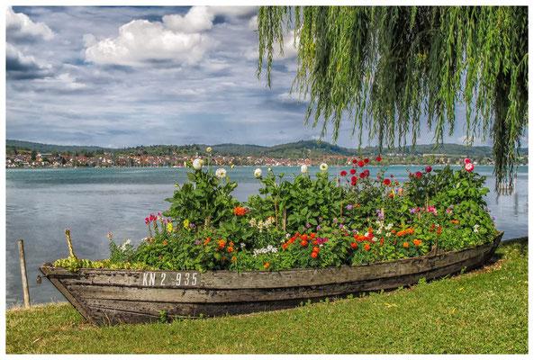 Bunt bepflanztes Blumenboot auf der Insel Reichenau - im Hintergrund der Gnadensee 9227