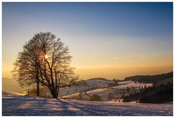 Blick vom Schauinsland 7815
