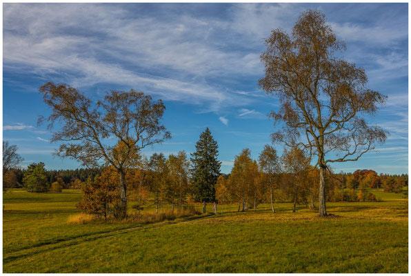 Landschaft im NSG Irndorfer Hardt 1346