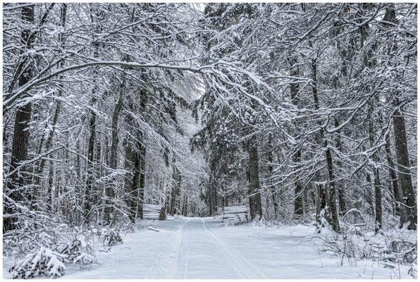 Verschneiter Winterwald bei Burg Wildenstein 5836