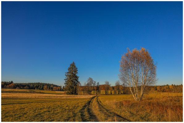 Landschaft im Irndorfer Hardt 4595