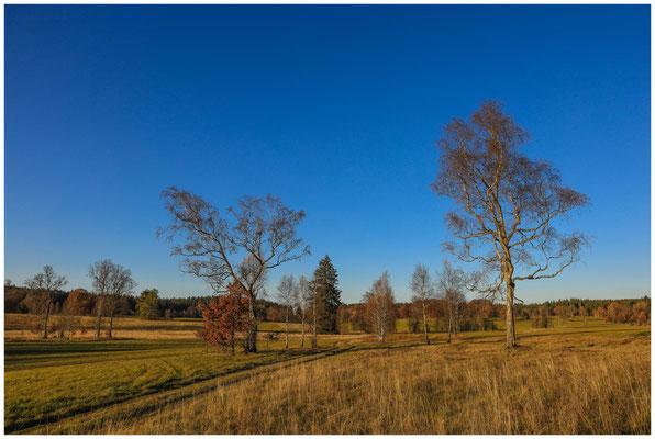 Landschaft im Irndorfer Hardt 4589