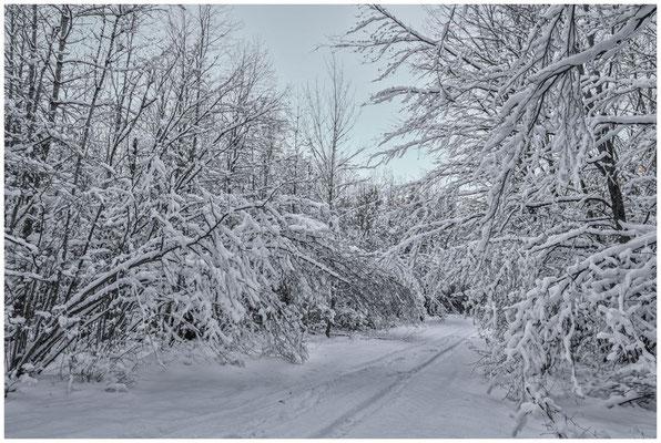 Verschneiter Winterwald bei Burg Wildenstein 5846