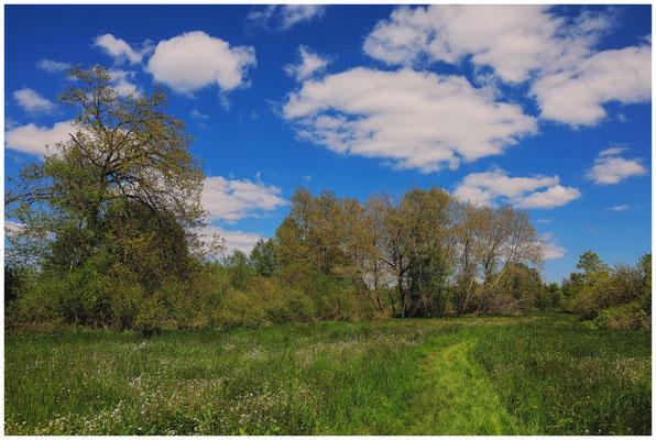 Frühlingslandschaft im Pfrunger-Burgweiler Ried 7320