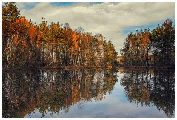 1832 Herbstlicher Wald im Schwenninger Moos