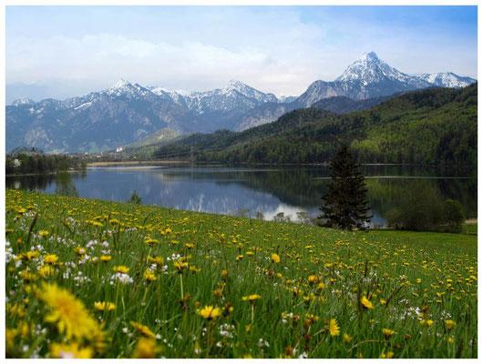 8489 Weißensee mit Blick auf Füssen