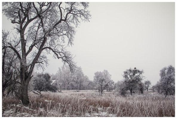 Winterlandschaft mit altem Bauernhaus bei Stockach 2444