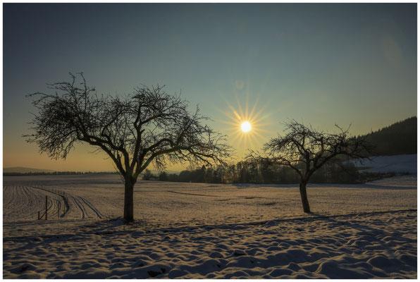 Bäume mit tiefstehender Sonne bei Münchhöf 5635