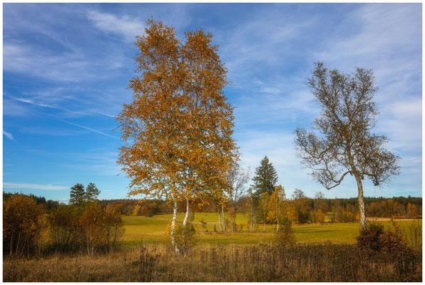 Landschaft im NSG Irndorfer Hardt 1343