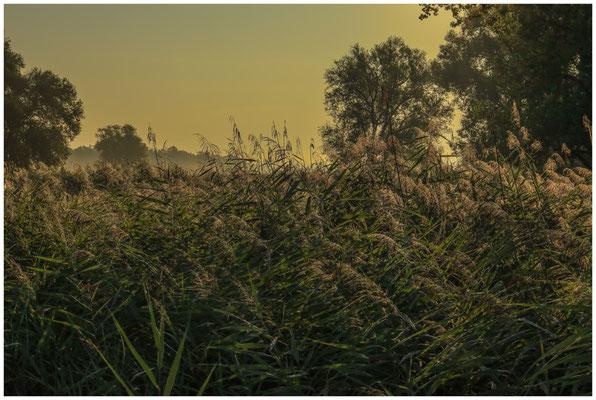 Uferlandschaft im Morgenlicht 0619