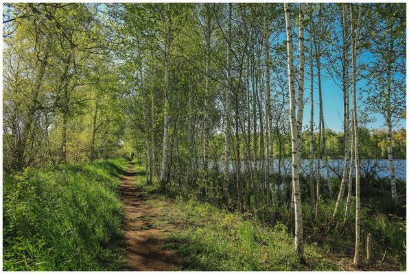 Wanderweg am Großen Vogelsee 7445