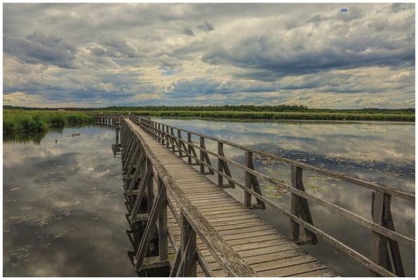 Uferlandschaft Federsee mit Steg 3377