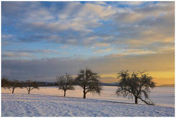 Obstbäume bei Münchhöf 5453