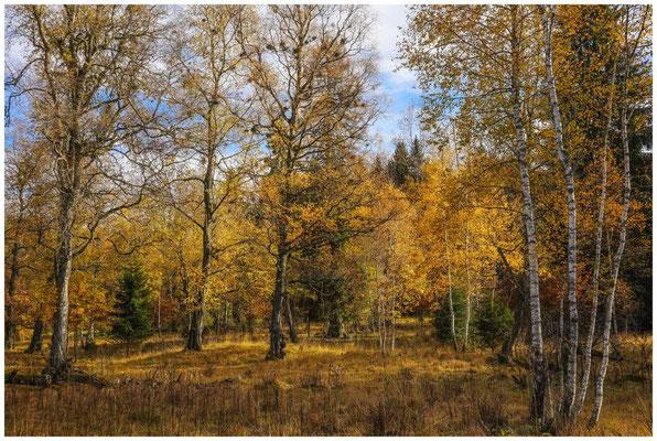 Bäume im NSG Irndorfer Hardt 1318