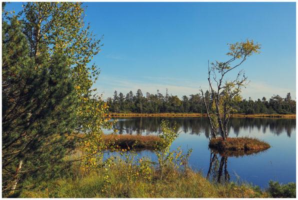 Uferlandschaft Wildsee 4320
