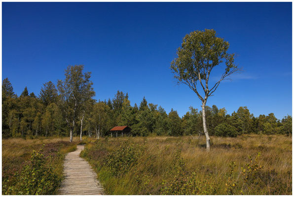Bohlenweg im Wurzacher Ried mit Torfhütte 3862