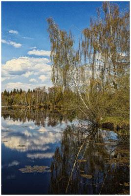 Uferlandschaft Großer Vogelsee 2108