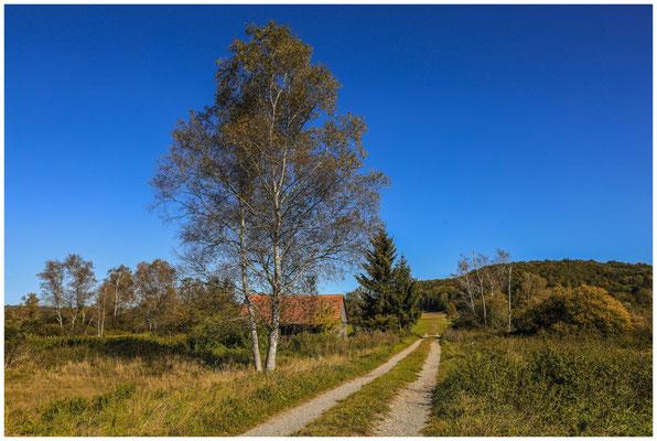 Landschaft im Pfrunger-Burgweiler Ried 4422