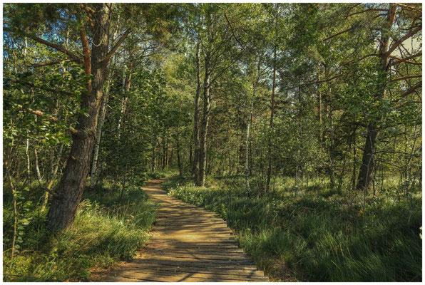 Bohlenweg am Großen Riedsee im Wurzacher Ried 3749