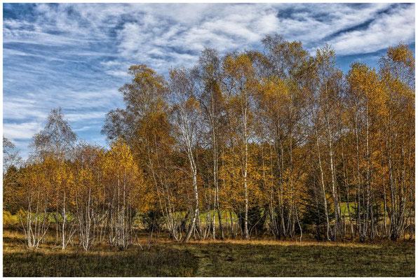 Bäume im NSG Irndorfer Hardt 1312