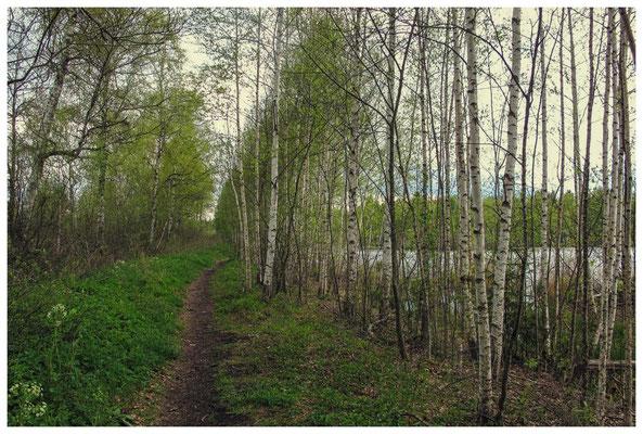 """Wanderweg """"Großer Trauben"""" - rechts der Vogelsee 3629"""