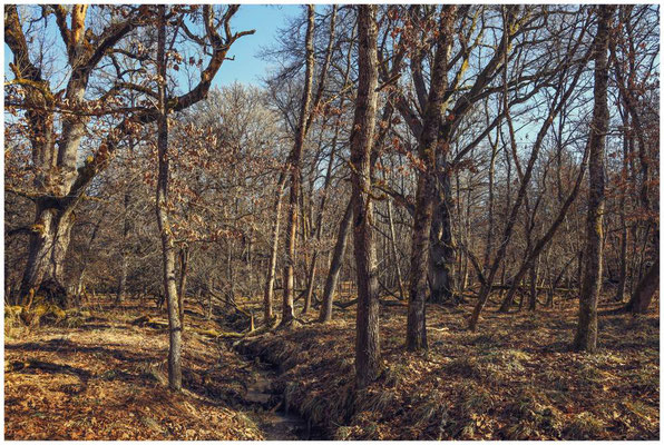 Bäume im Unterhölzer Wald 6160