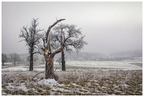 Winterliche Streuobstwiese mit Raureif 2544