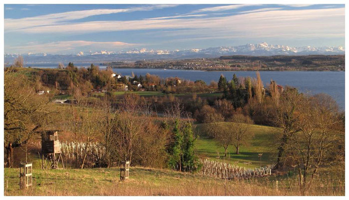 Blick auf den Überlinger See, Wallhausen und Alpenkette 6894a