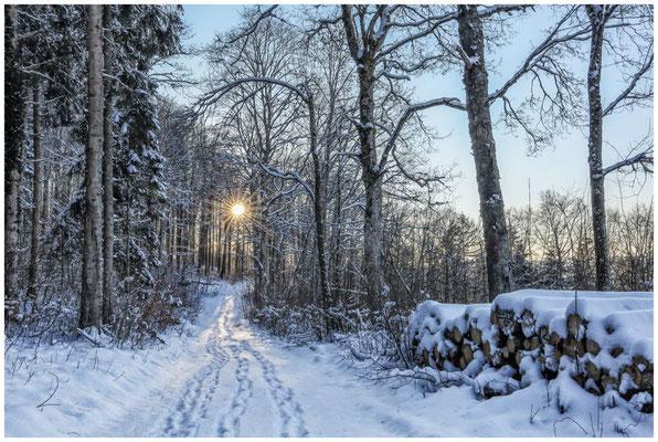 Waldweg bei Burg Wildenstein 5834