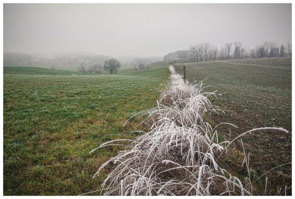 2043 Landschaft mit Raureif bei Mahlspüren im Hegau