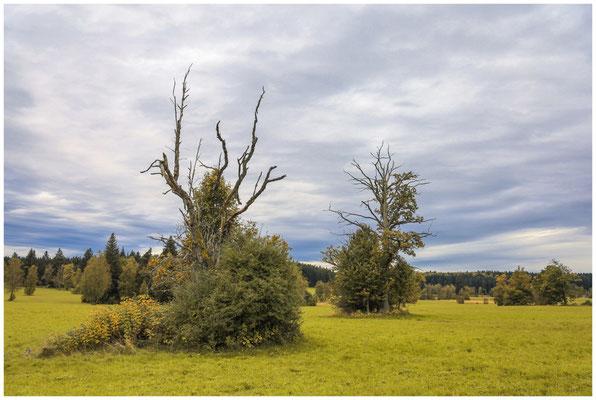 Landschaft im Irndorfer Hardt 8617