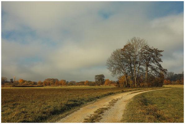 Fußweg durch das Hausener Aachried 4765