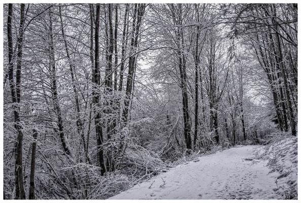 2271 Winterwald
