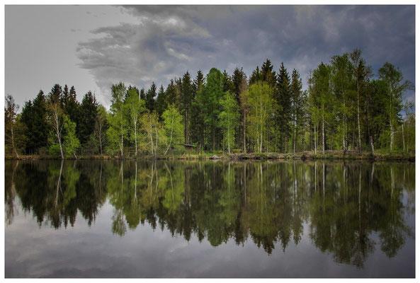 Spiegelung im Moorsee 3711
