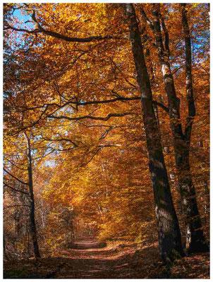 6949 Uferweg Mindelsee