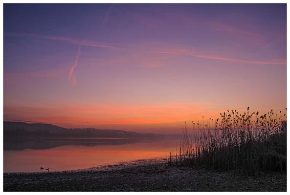 Morgendämmerung an der Mettnauspitze mit Blick auf das Allensbacher Ufer 2810