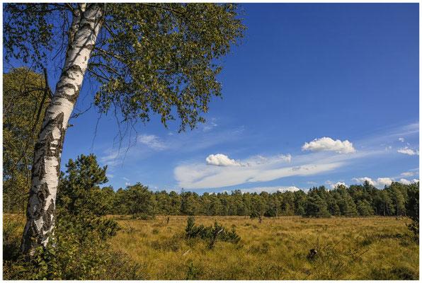 Landschaft mit Moorbirke im Wurzacher Ried 3880