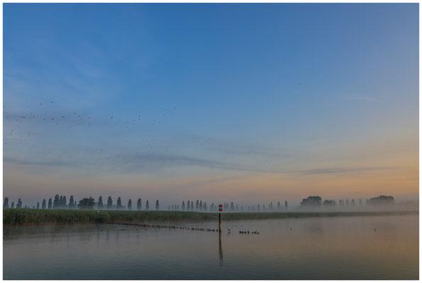 Morgendämmerung über dem Aachried und dem Zeller See  3510
