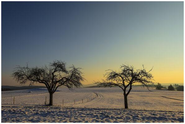 Bäume im Abendlicht bei Münchhöf 5633