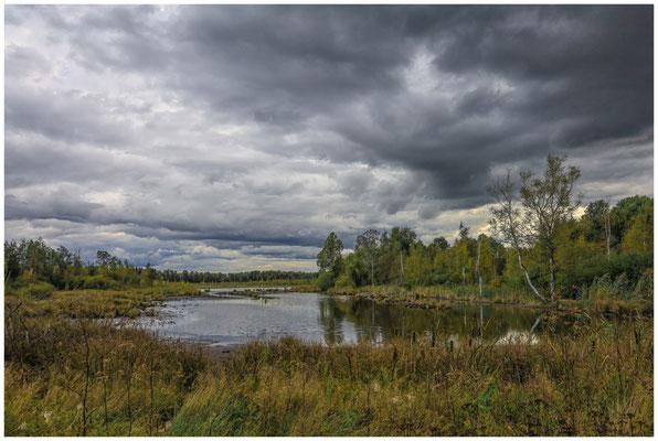 Uferlandschaft Schwenninger Moos 4181