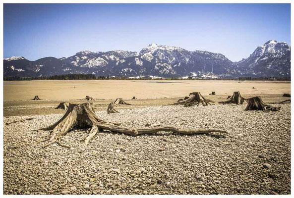 Baumstümpfe im abgelassenen Forggensee (Stausee) bei Füssen