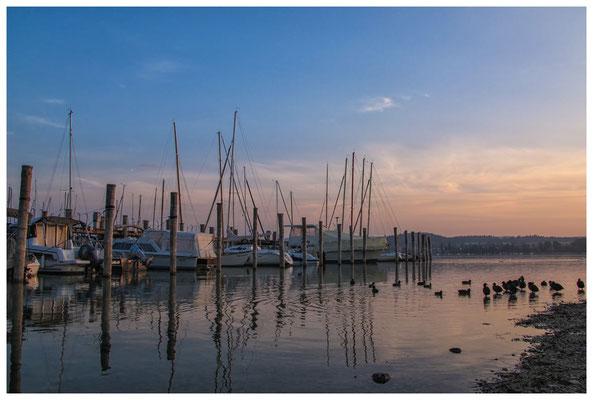 Morgenstimmung im Jachthafen - Insel Reichenau 0153
