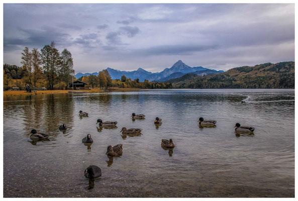 Wasservögel auf dem Weißensee